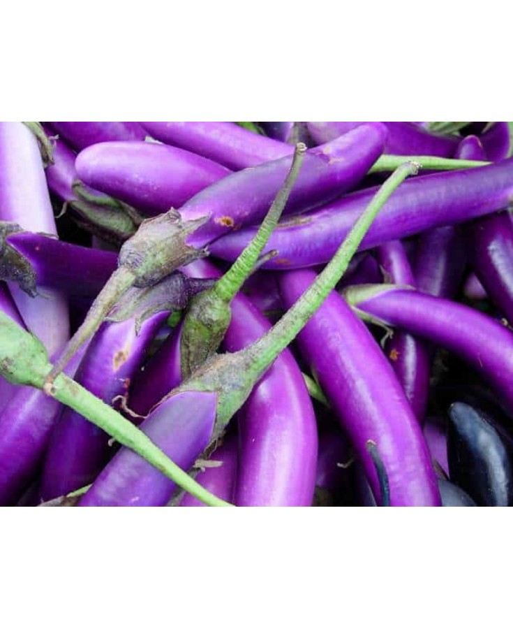 Brinjal (Local)