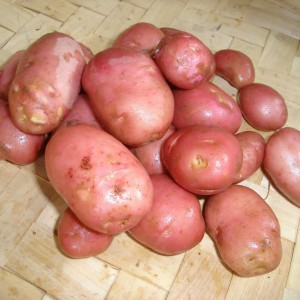Potatoes (Local)
